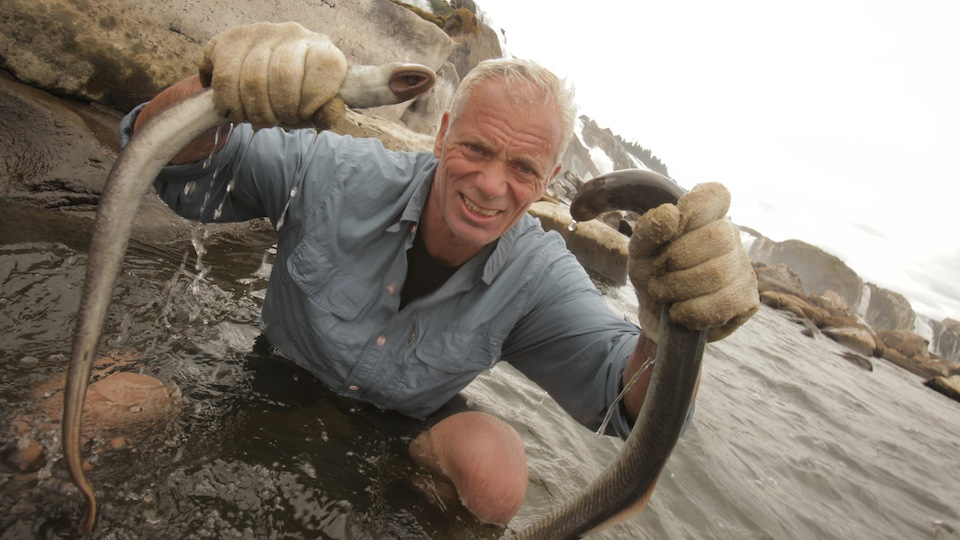 River monsters renewed for season 7 by animal planet for Pool show on animal planet
