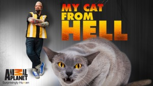 My Cat From Hell Renewed For Season 9 By Animal Planet!