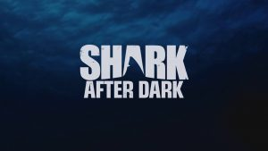 Shark After Dark Renewed For Season 6 By Discovery!