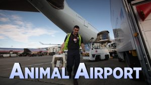 Animal Airport Renewed For Series 3 By More 4!